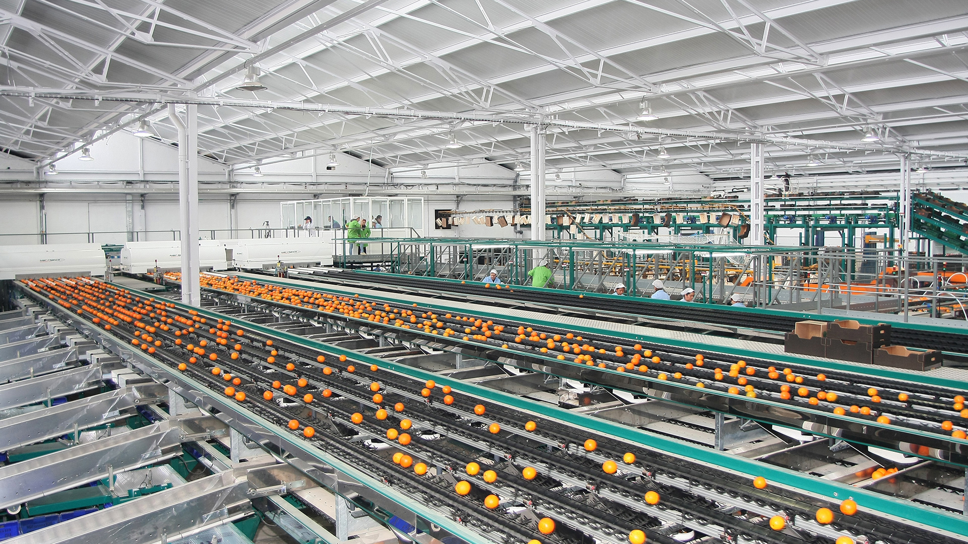 The sizing machine lets a packer in Valencia, Spain accurately grade oranges