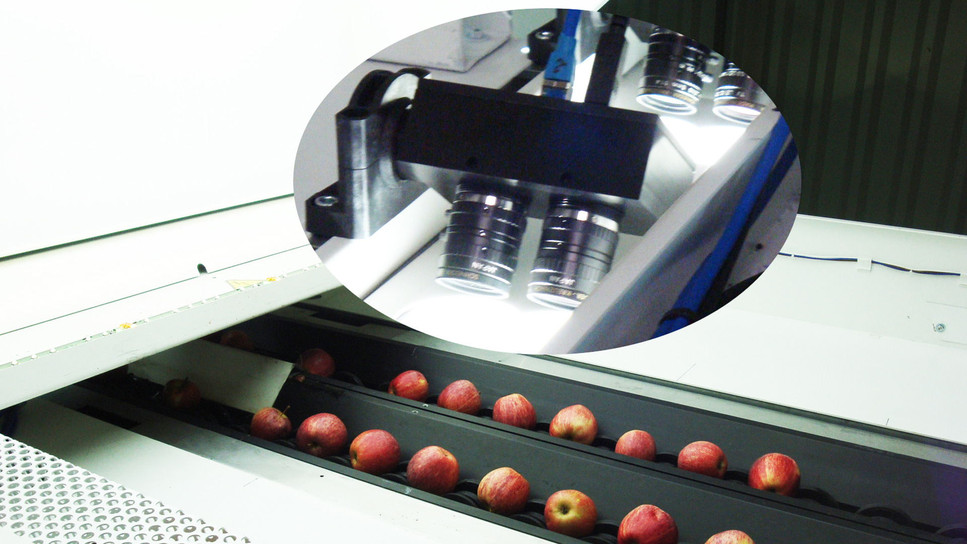 GLOBALSCAN® vision system taking pictures of the fruit